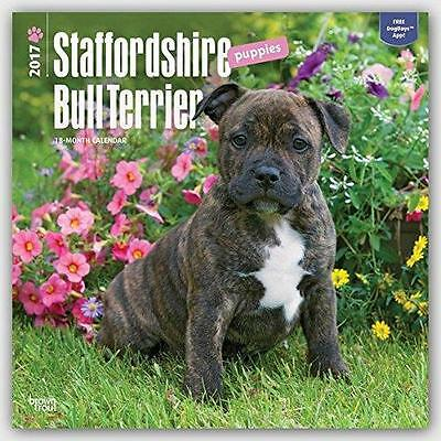 Staffordshire Bull Terrier Puppies Square 2017 Wall Calendar + Free Uk Postage