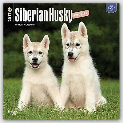 Siberian Husky Puppies Square 2017 Uk Wall Calendar + Free Uk Postage Sale !!