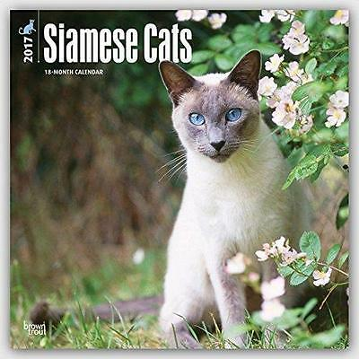 Siamese Cats Square 2017 Uk Wall Calendar By Brown Trout + Free Uk Postage