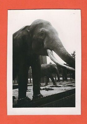 17/40  Foto Elefant Zoo - Portrait ?