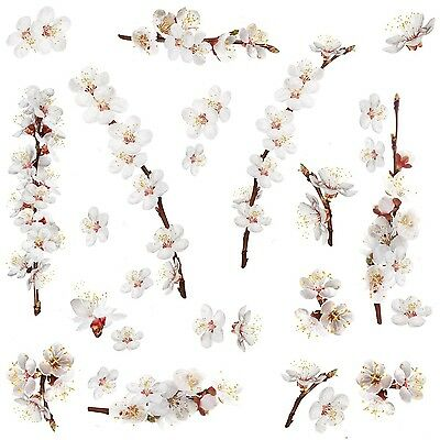 RoomMates RMK2085SCS Dogwood Branch Peel and Stick Wall Decals New