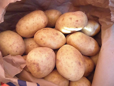 Cornish  washed potatoes  in 25kg bags.