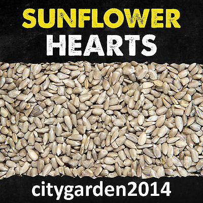 Sunflower Hearts Wild Bird Food - Premium Bakery Grade 4kg, 20kg, 30kg, 60kg