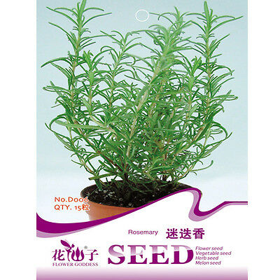 15pcs Rosemary Seeds Rosmarinus Officinalis Spice Herb