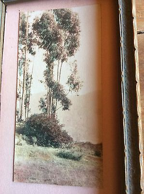 VINTAGE WATER COLOR Painting Signed EUCALYPTUS TREES MINIATURE  FRAMED ANTIQUE