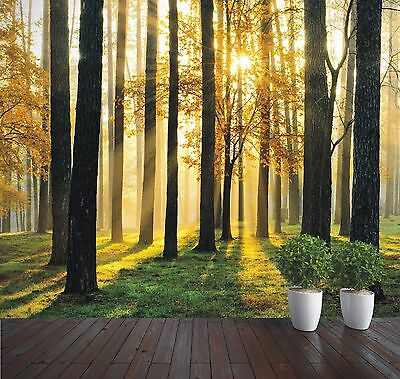 Wallpaper Mural Forest Sunrise trees photo wall mural (16170744) Forest