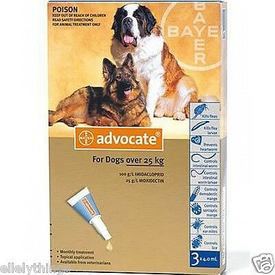 Advocate for Large Dogs over 25  Kg  3 Pipettes