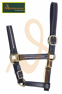 Rumani DD Leather Halter For Events & Shows With Sparkle Decoration