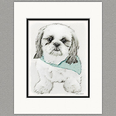 Shih Tzu Dog Original Art Print 8x10 Matted to 11x14