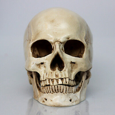 Retro Human Skull Replica Resin Anatomical Model Medical Life size 1:1