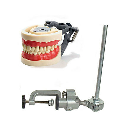 Dental Typodont  200 and Pole Mount Compatible w/ Kilgore Nissin Brand Teeth