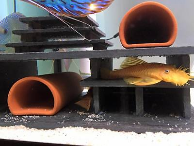 """Pleco Mini 2 D-plus Fry Saver"" Breeding Cave Set Bristlenose Ancistrus L134"