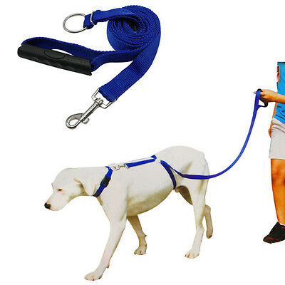 Dog Instant Trainer Leash for Dogs Pets Rope Walking Training 30lbs Stop Pulling