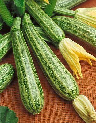 ITALIAN STRIPED ZUCCHINI (COURGETTE) - 15 seeds (HERITAGE)