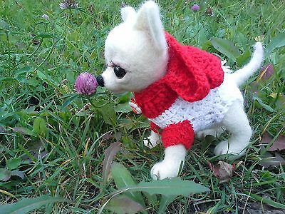 Smooth-haired Chihuahua. Jolie on a walk.Unique & exclusive Toy