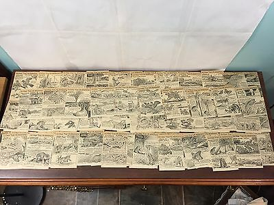 RARE VINTAGE WALT DISNEY'S TRUE LIFE ADVENTURES LOT 100 CLIPPINGS 1960's 50's