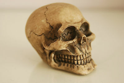 Vivarium Decoration Human Skull 6.5 x 5 x 5 Suitable For All Reptile Tanks