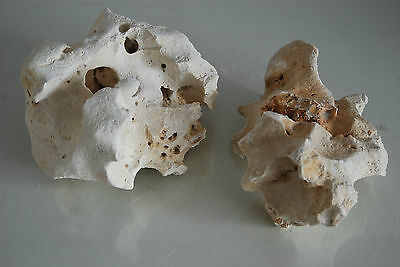 Aquarium Natural Coral Cichlid Rock 2 Pieces Suitable For All Aquarium Use BA14