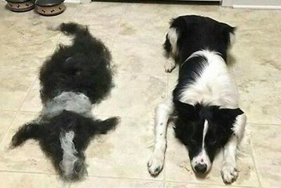 FURminator deShedding Tool Brush for Large Dogs and Cats with Long Hair