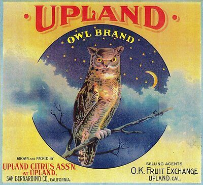 Upland San Bernardino California Owl Orange Citrus Fruit Crate Label Art Print