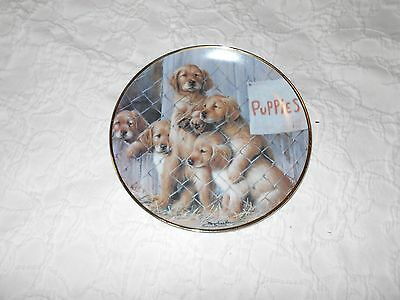 """A.S.P.C.A. GOLDEN Retriever """"Adopt a Puppy"""" Limited Edition Collectors Plate"""