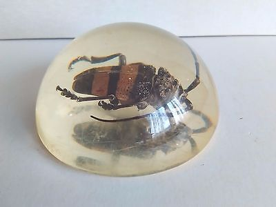 Vintage Clear Lucite Paperweight with Beetle 1960`s 1.46x2.95 in
