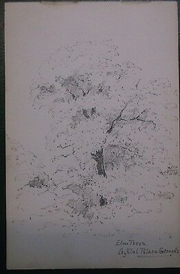 GRAPHITE DRAWING 1890s A STUDY OF ELM TREES AT CRYSTAL PALACE GROUNDS
