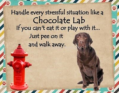 CHOCOLATE LAB Handle Stressful Situations Dog Fridge Magnet