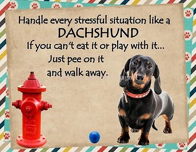 DACHSHUND Handle Stressful Situations Magnet