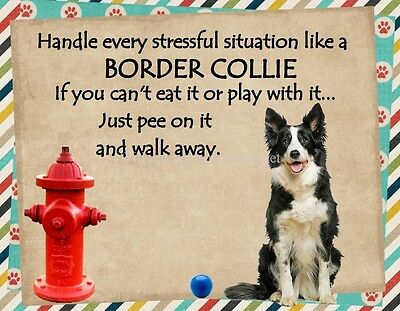 BORDER COLLIE Handle Stressful Situations Magnet