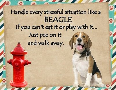 BEAGLE Handle Stressful Situations Magnet