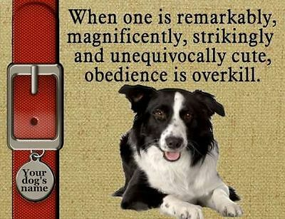 BORDER COLLIE Dog Magnet Obedience is Overkill Personalized with YOUR Dog's Name