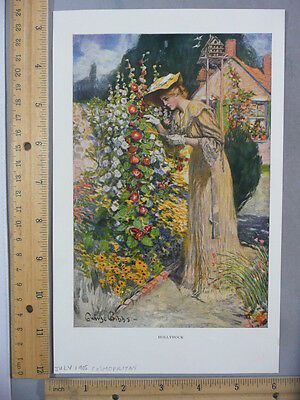 Rare Antique Original VTG July 1905 Cosmopolitan Hollyhock Gibbs Litho Art Print