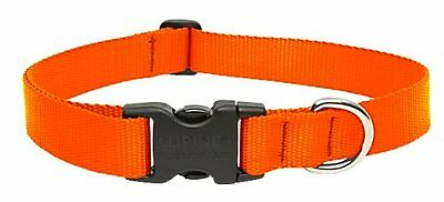 LupinePet 1-Inch Blaze Orange 16-28-Inch Adjustable Dog Collar for Large Dogs