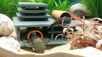 """Hypan Mini 2 D-plus Fry Saver"" Breeding Cave Set Pleco Ancistrus L046 L129 L260"