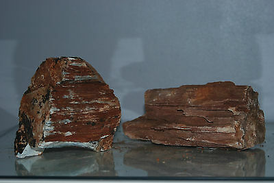 Natural Aquarium Redwood Lines Rock x 2 Pieces Suitable for Aquariums 4B