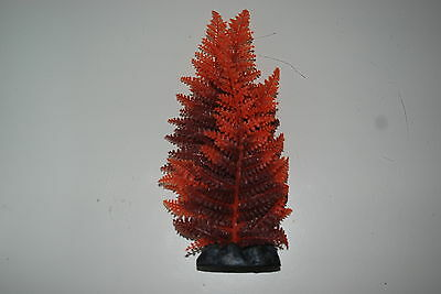 Aquarium Broad Leaf Red Fern Plant 30 cms High Suitable For All Aquariums