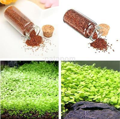 One Bottle of Aquarium Grass Seeds Carpet Water Aquatic Plant Grass Seeds AU
