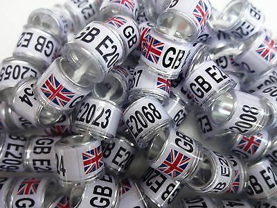 20 x UNION JACK GB 8mm quality pigeon rings - Supplied by 'NPR'