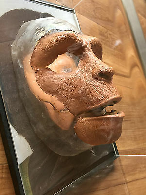 Planet of the Apes Zira prosthetics, from photo shoot, collectible