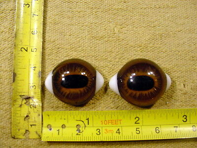 a pair vintage solid Glass Eye size 25 x 30 mm doll bears taxidermy age 1910 A25