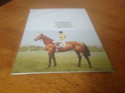 Horse Racing Greetings Cards (8 Famous Racehorses)