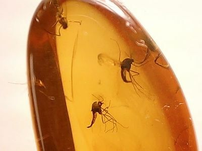 Baltic Amber with Winged Insect Inclusion #09