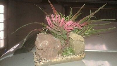 Plante artificielle aquarium sur rocher