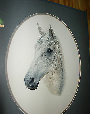 ORIGINAL WATERCOLOR PAINTING Matted Portrait Art Gray White Ticked Horse