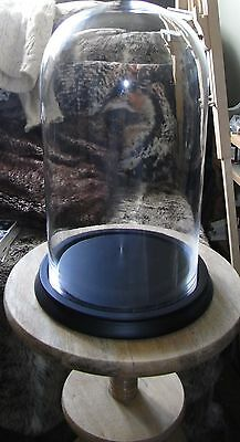 Large Glass Cloche / Dome - Black Base - Taxidermy / Art / Display