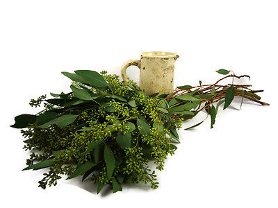 Fresh cut seeded eucalyptus,seed euc,fresh foliage,fresh flowers,eucalptus,euc