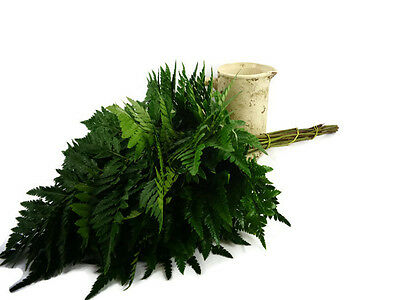 Fresh cut baker fern,fresh cut leathers leaf,fresh bakers fern,Fresh cut foliage