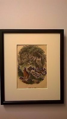 ANTIQUE PRINT COLOURED ENGRAVING OF RABBITS AND HARES c1875 MOUNTED FRAMED