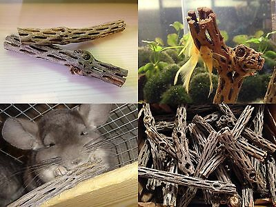 Cholla Log Wood - CHOLLA LOGS back in stock Shrimp Bristlenose Pleco Chinchilla